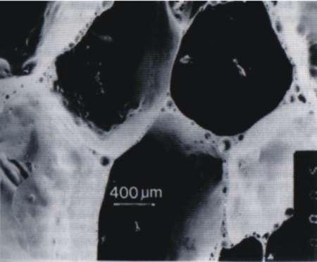 struktura penoskla